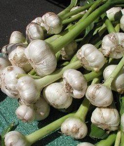 Garlic-Heirloom Bulk