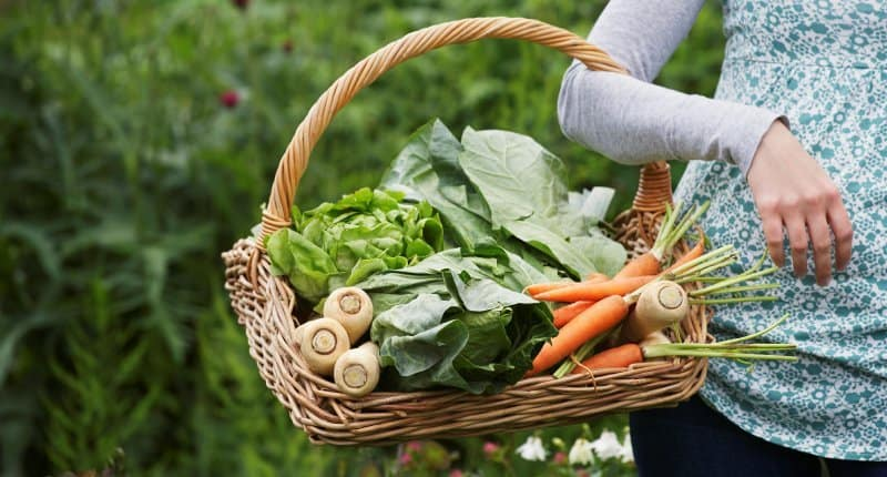 Moore Farms & Friends - Fresh Organic Slow Food From Our Farmers to Your Family