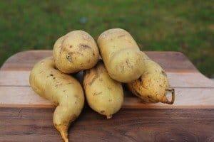 white-sweet-potatoes